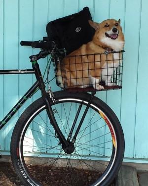basketbike-600x753